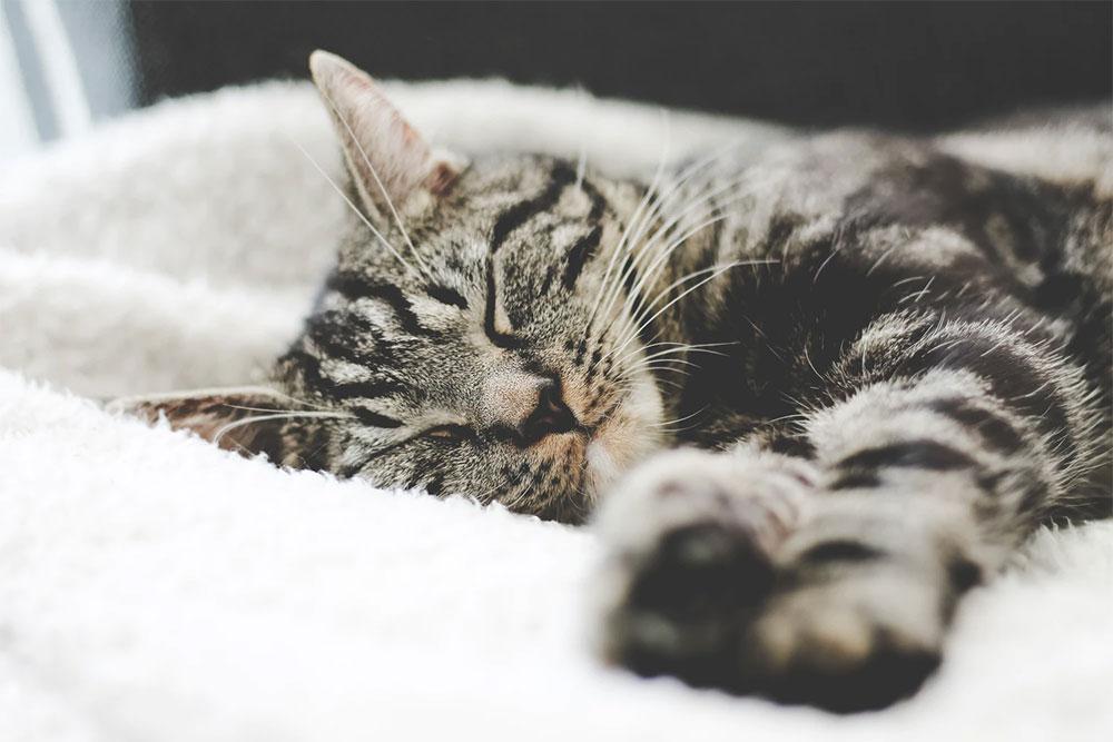 Phrasal verbs of Sleep - วลีภาษาอังกฤษ เกี่ยวกับการนอน