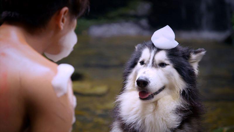 ซีรีส์ Prince of Wolf เจ้าชายหมาป่า