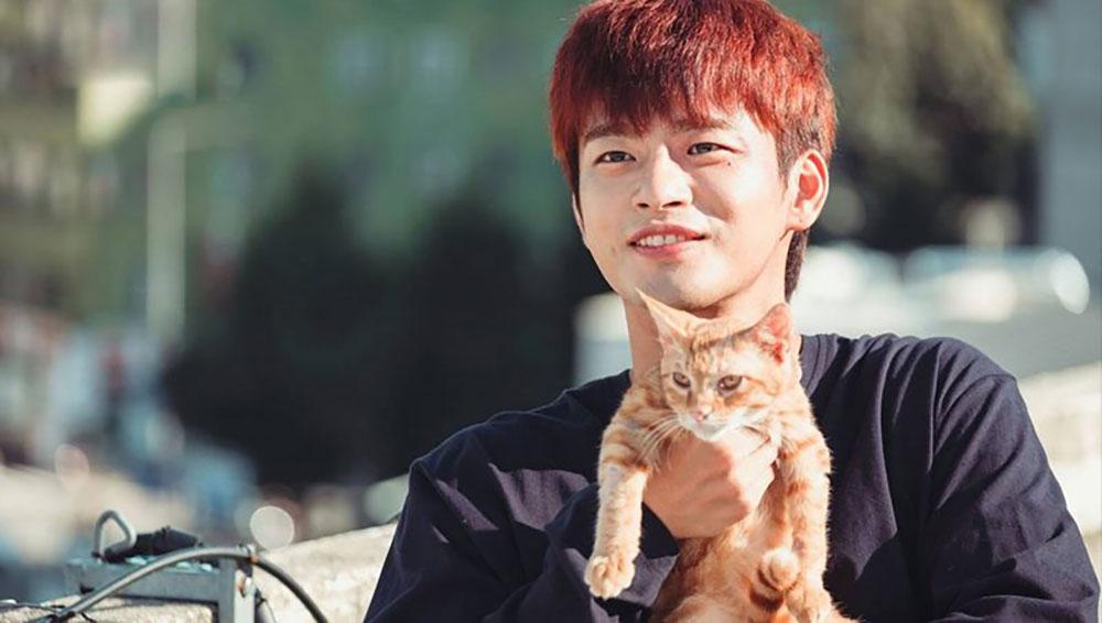 ซออินกุ๊กกับเจ้าแมวส้ม