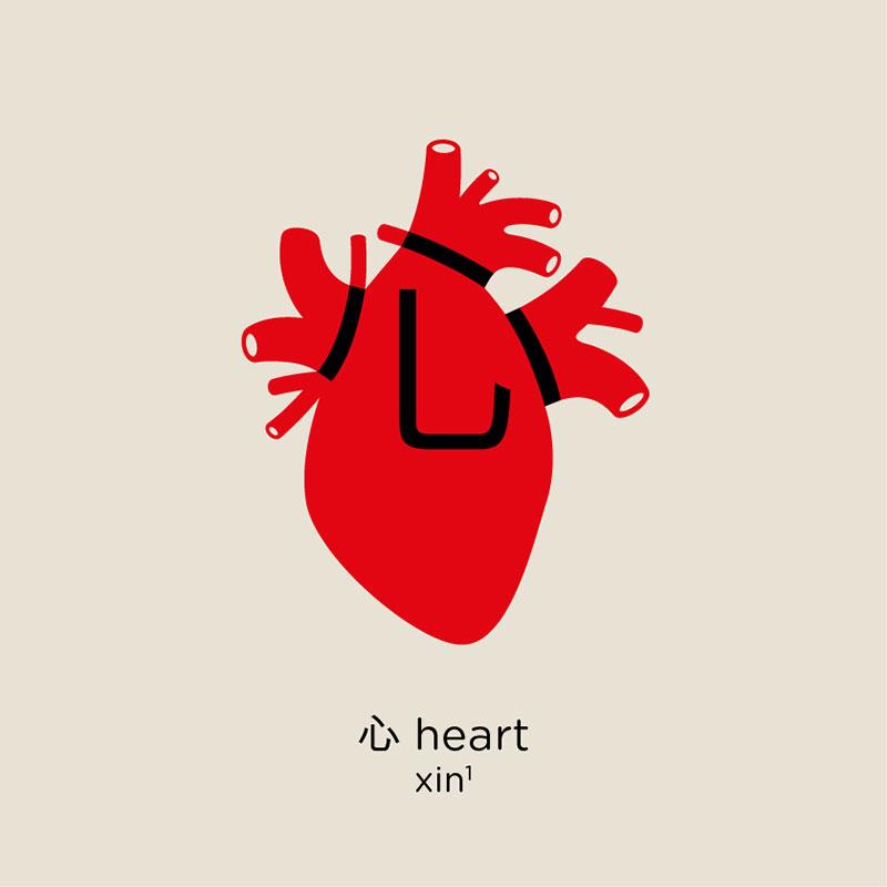 heart - หัวใจ