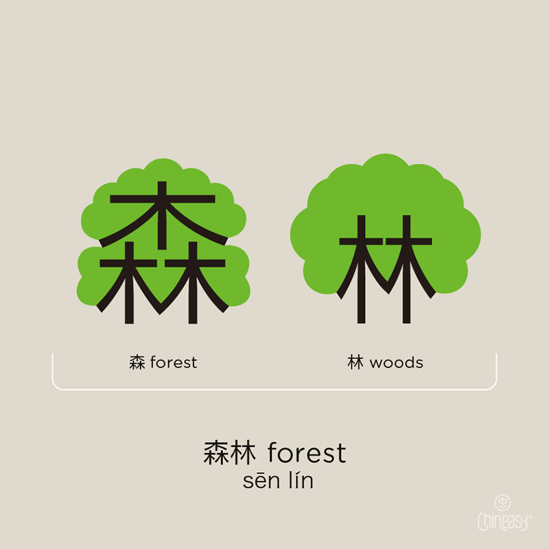 Forest - woods