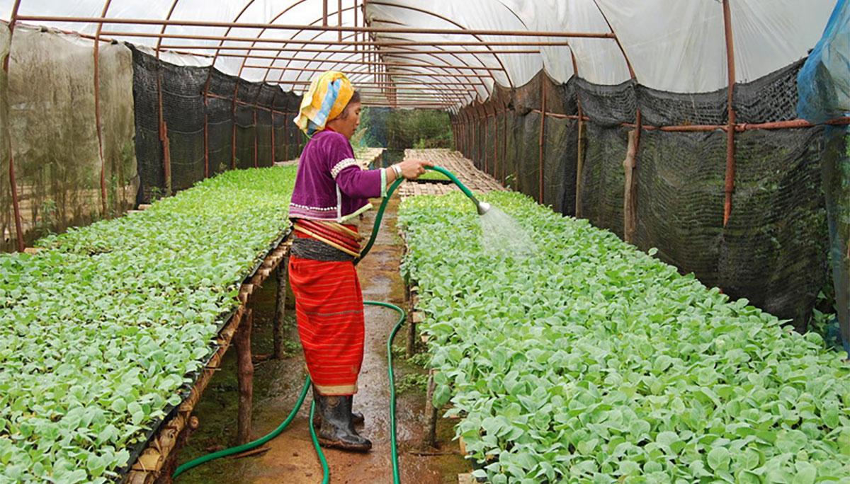 แนวทางที่เหมาะสม ปลูกพืชผักคุณภาพ บนพื้นที่สูง