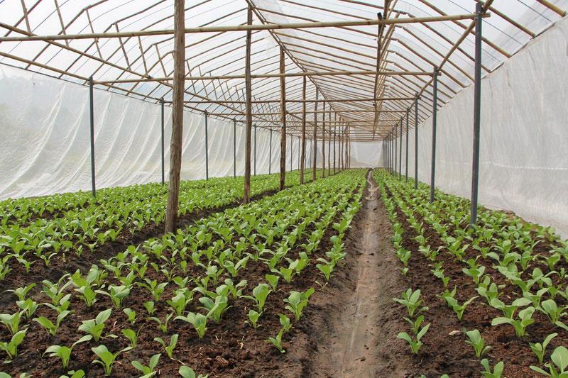 สวพส. แนะแนวทางที่เหมาะสม ปลูกพืชผักคุณภาพบนพื้นที่สูง เป็นมิตรต่อสิ่งแวดล้อม
