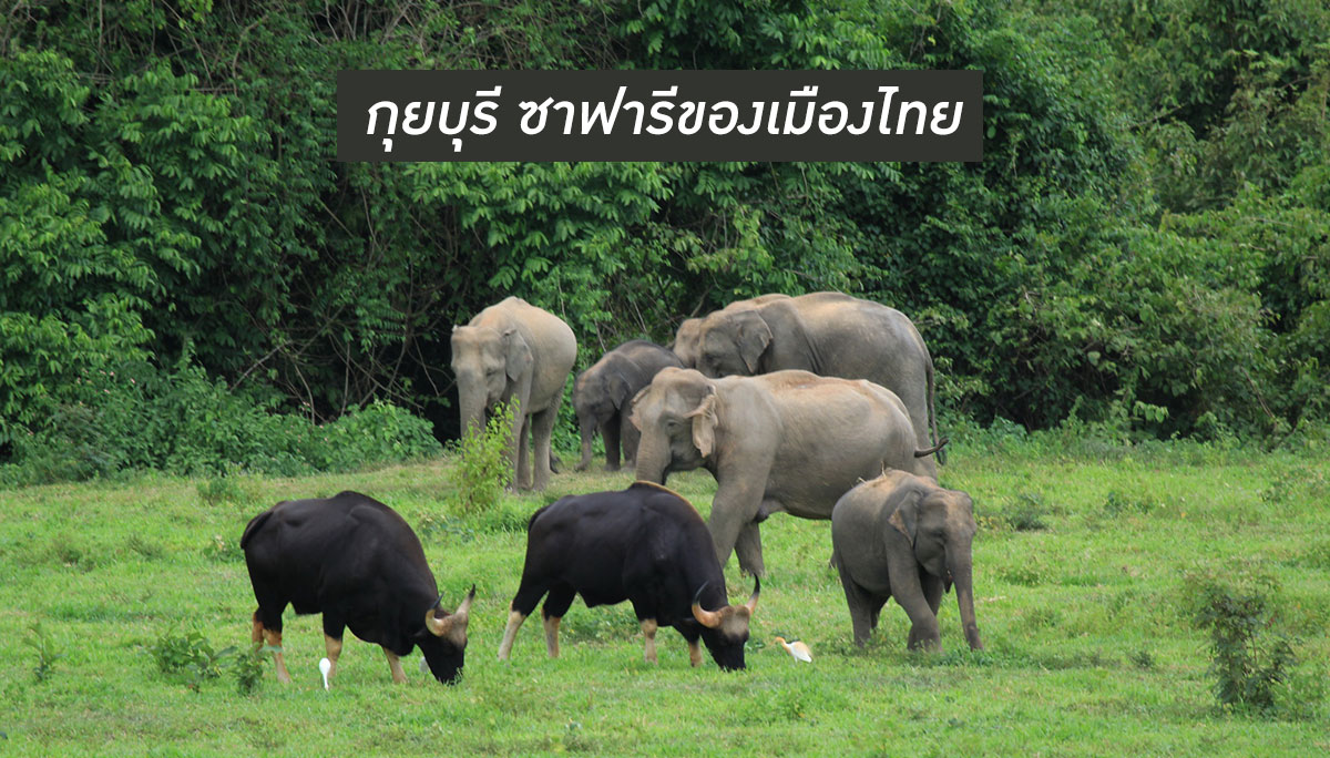 กุยบุรี ท่องเที่ยว ประจวบคีรีขันธ์ อุทยานแห่งชาติ อุทยานแห่งชาติกุยบุรี
