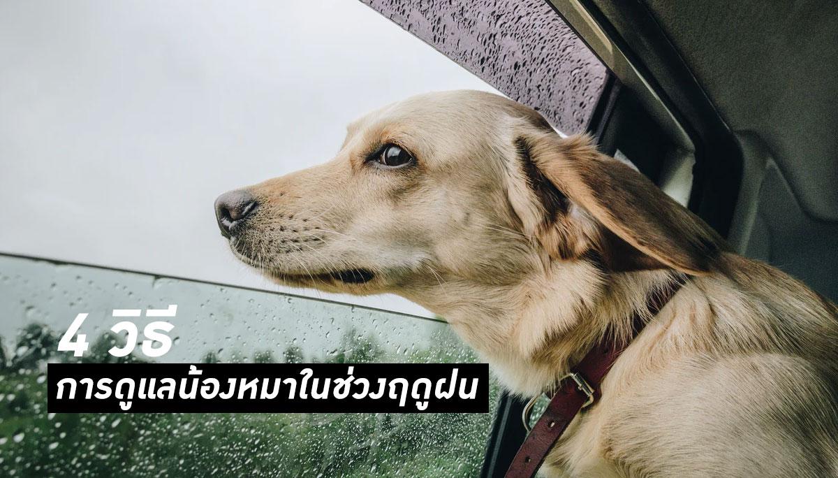 สัตว์เลี้ยง สุนัข หมา