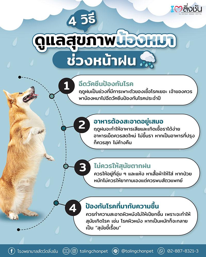 5 โรคร้ายในสัตว์เลี้ยง ช่วงหน้าฝน - 4 วิธี การดูแลสุนัขในช่วงฤดูฝน
